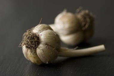 20071025_whole_garlic_001_2