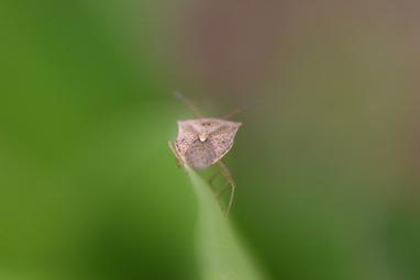 Bugs_6_triangle