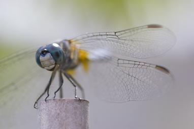 072208_dragonfly_03