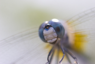 072208_dragonfly_04