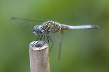 072208_dragonfly_05
