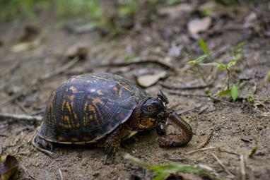 Ga_serenbe_turtle